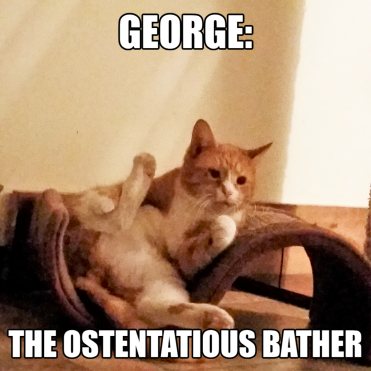 George - The Ostentatious Bather
